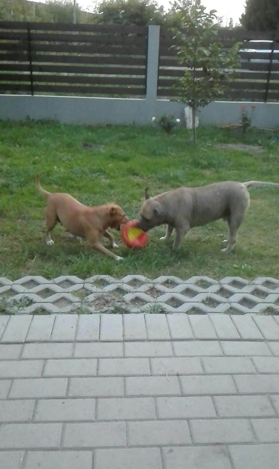 Dorisz és Bendi játszanak a labdával :-)